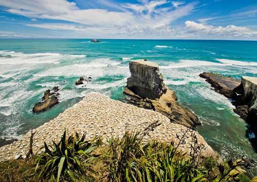 Muriwai Beach West Auckland